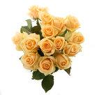 Roos-Peach-Avalanche-Medium-(15-stuks)(Roos-Peach-Avalanche-Medium-(15-stuks))
